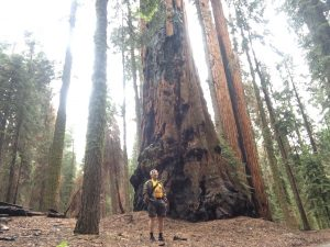 En el Sequoia National Park (California)